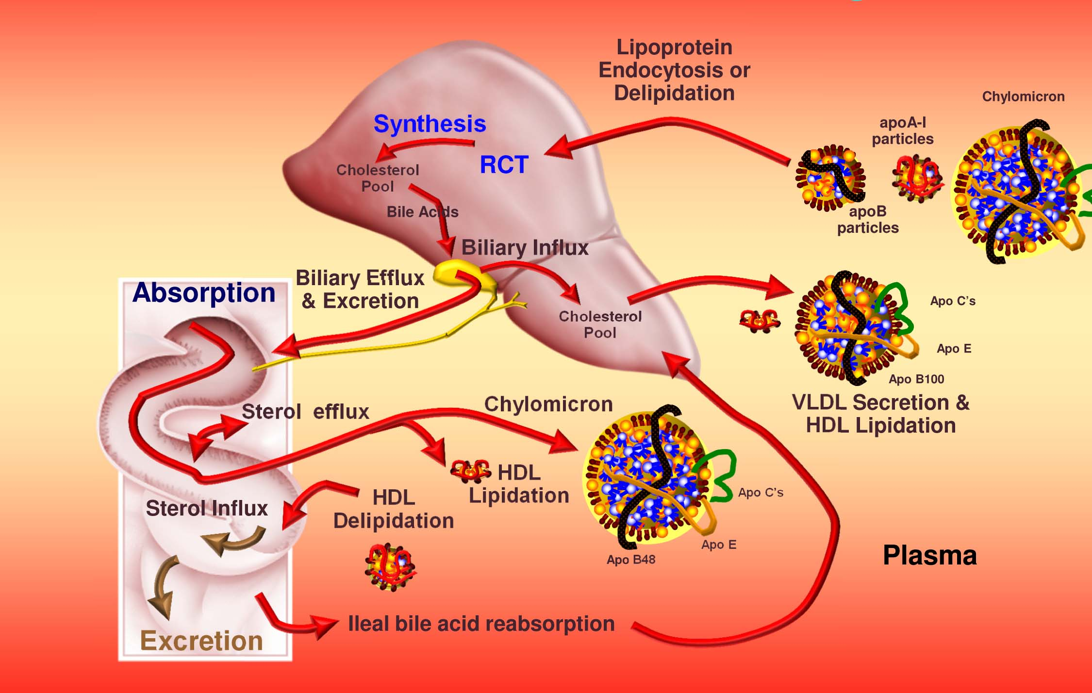 Do You Have Any Idea About Cholesterol Dr Iman Firmansyah