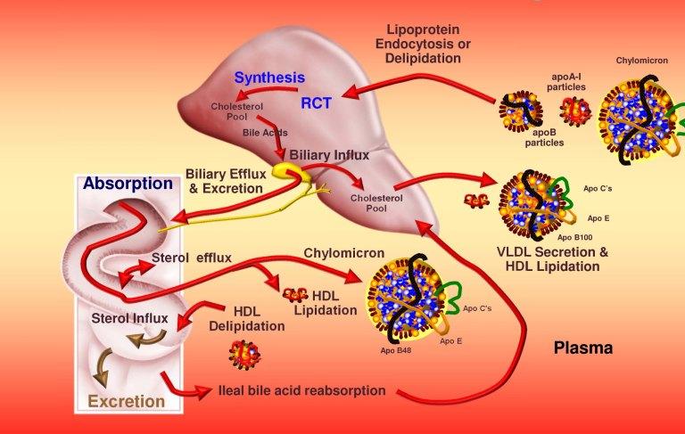 Lipoprotein Trafficking.pptx [Read-