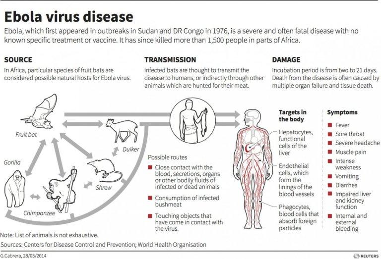 ebolaD1